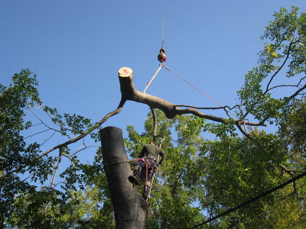 Made In Michigan >> Crane Assisted Beech Tree Removal – Livonia, MI @ Tree ...